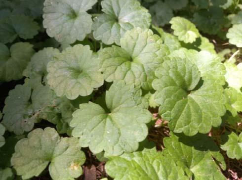 들판의 잡초 '긴병꽃풀', 경기도 연구진 통해 기능성 화장품으로 다시 태어나